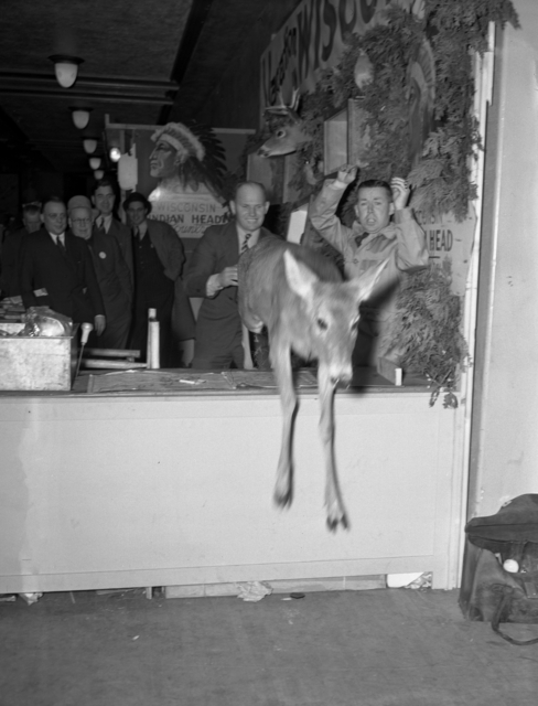 Deer escaping