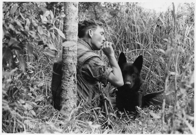 Soldier and dog in Vietnam