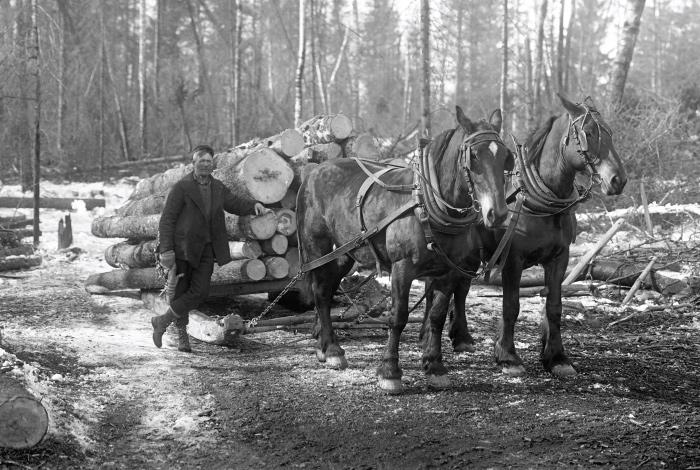 Logging industry.