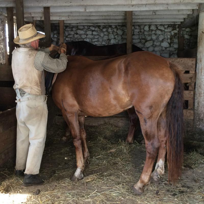 A farmer next to a horse in a barn