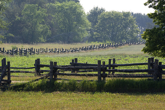 A wooden fence surrounding a field next to an oak grove