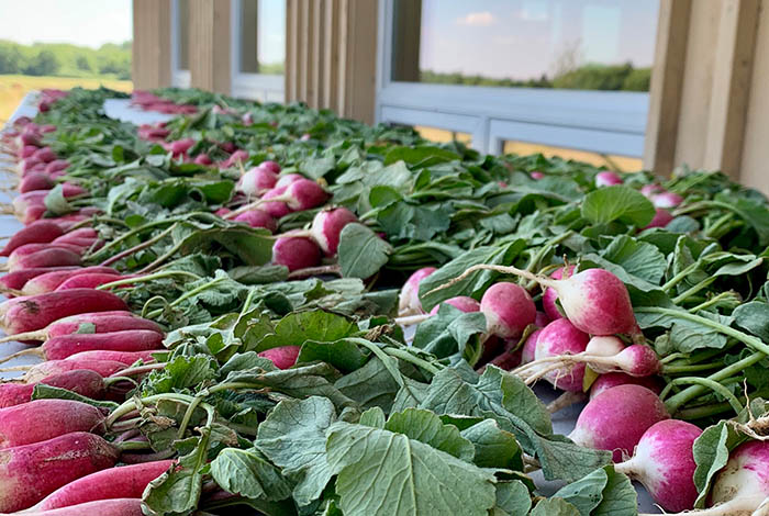 A table full of radishes.