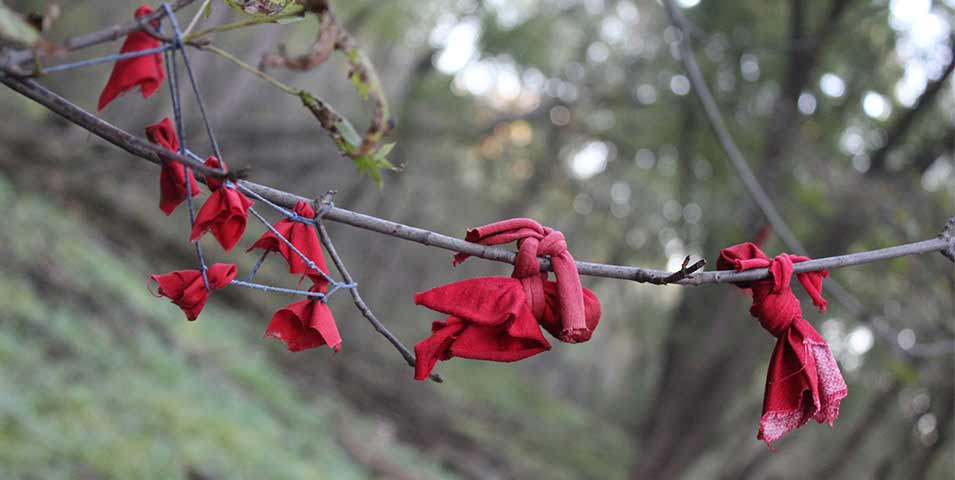 Pieces of red cloth tied to a branch.