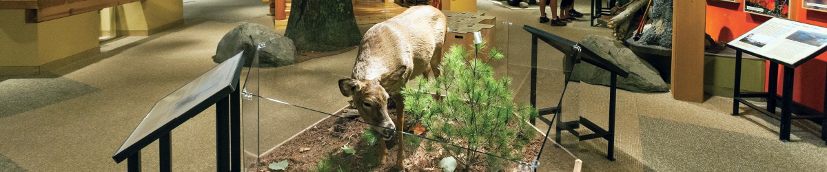 A museum exhibit featuring a taxidermy elk.