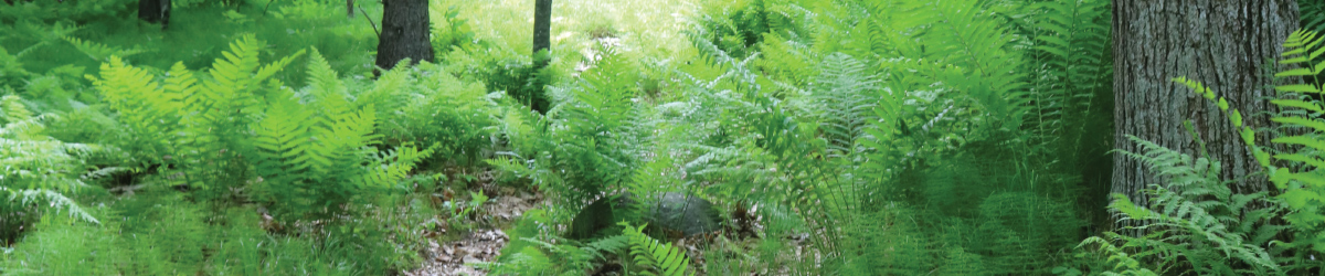 Green plants in a forest.