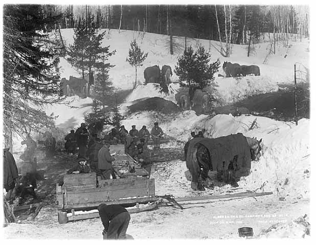 Photo of lumberjacks and their horses eating lunch in the woods, the sled that brought the lunch is in the foreground, 1916.