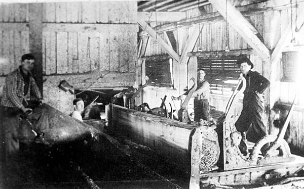 Photo of sawmill interior, the chief sawyer is crouching next to the blade of the gang saw.