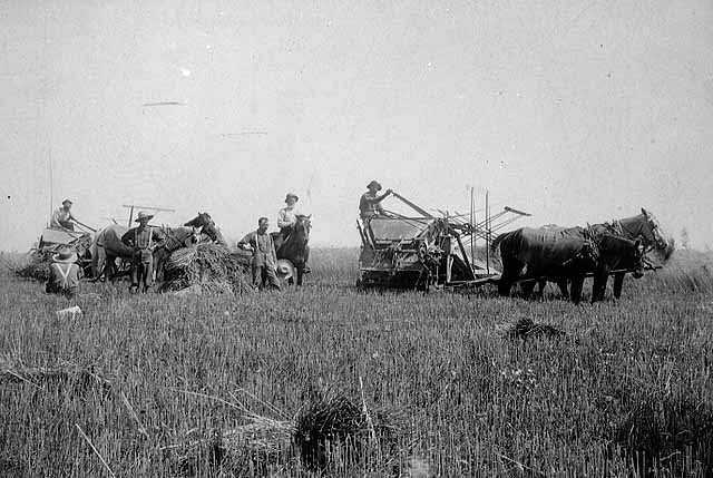 Photo of a small crew binding grain, 1891.