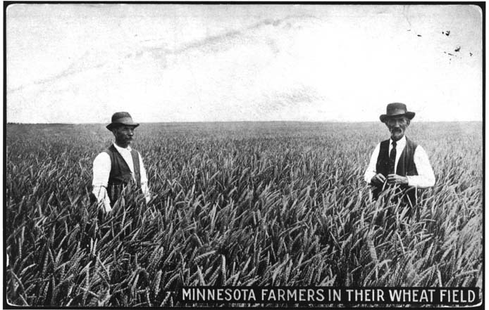 Postcard of two men standing chest-high in a wheat field.