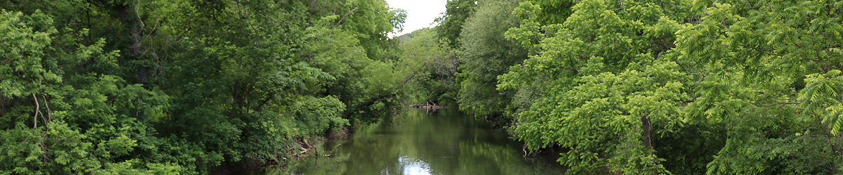 Green trees frame a river.