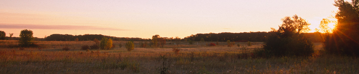 Birch Coulee Battlefield in dusk sunshine.
