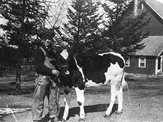 Evert Mainquist with calf, 1920. Loc. no. SA3.1 r94
