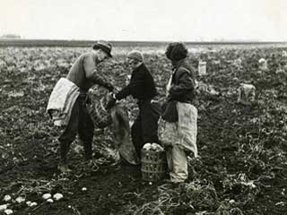 Workers in a Minnesota potato field. Loc. no. SA4.54 p8