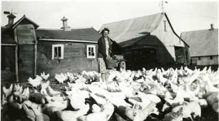 Victoria Sherman with her flock of chickens, ca. 1943-1944.