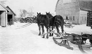 Photo: Hauling wood by horse-drawn sleigh on Magnus Johnson farm, Meeker County, 1932.
