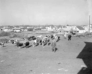 Photo: View of housing development near John Tierney farm, Sixty Second Street and Penn Avenue South, Richfield, 1954.