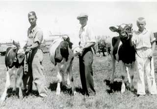 Melfred Roragen, Chester Morvig and Paul Gredvig with dairy calves, 1934.