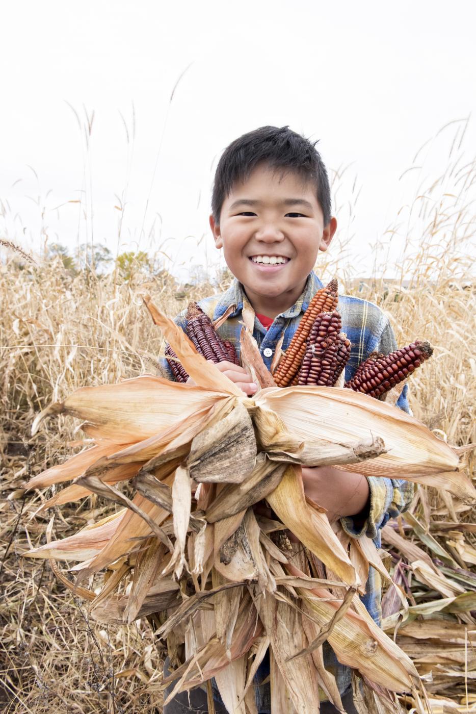 Boy holding corn in a field