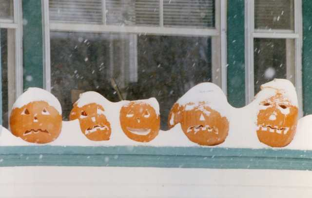 Jack-o'-lanterns covered in snow