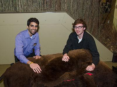 College interns with fur artifact